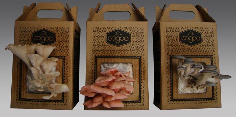 Cogubras inova trazendo kits para cultivo de cogumelos em casa